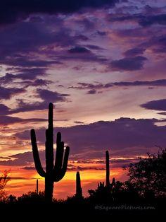 Purple by Saguaro Pictures, via Flickr