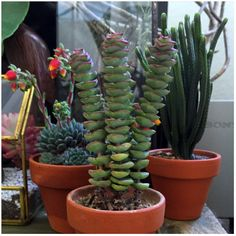 Urban Jungle Bloggers: My Plant Gang by @eatbloglove