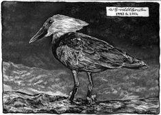 A hamerkop bird