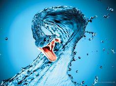 Water Snake - snake, blue, ab, winter