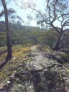 New Bush Path.