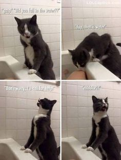 Cat calls for help - http://www.lolcaption.com/extremely-funny-pictures-of-animals/cat-calls-for-help/