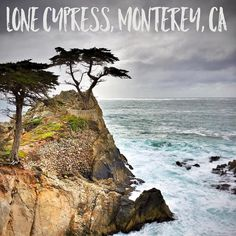 The famous Lone Cypress tree (ignore the other one). #pebblebeach #monterey
