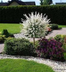 ´HAKURO NISHIKI´, v záhone Landscaping With Boulders, Front Yard Landscaping, Landscaping Ideas, White Gravel, Diy Pond, Pond Waterfall, Front Yard Design, Ornamental Plants, Cottage Gardens