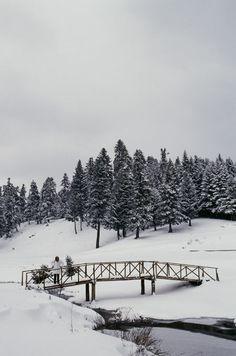 christmas #greece#elatii#pertouli