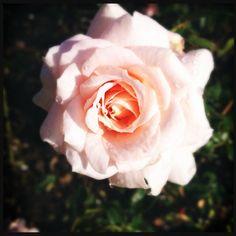 Rose Made bij Astrid Vermeulen