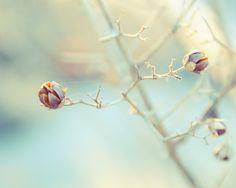 a bare branch