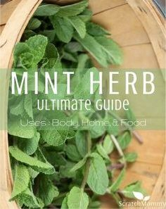 Mint Herb Ultimate Guide (uses for body, home, and food!)- Scratch Mommy