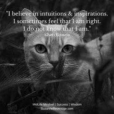 INTUITION is our theme this week. The thing about intuition is that you don't know whether it is right or not (just like everything in life)..what's important is to trust it and go with the flow. Just like our feline friends! Do you have examples of trusting your intuition?