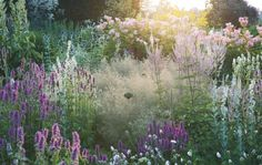 pastel shades of naturalistic planting