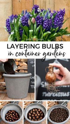 How to Plant Fall Bulbs for Long-Lasting Spring Colour - Layering fall bulbs refers to planting different types of flower bulbs at different depths in the soil to stagger the bloom times and increase Container Flowers, Container Plants, Succulent Containers, Fall Container Gardening, Succulent Planters, Flower Planters, Spring Garden, Lawn And Garden, Autumn Garden Pots