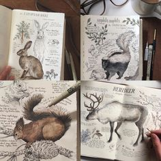 🌿Shop Update🌿Custom hand-illustrated Journal Pages now available to order on my Etsy site! Nothing is off the table, badgers, dinosaurs, birds, hippogriffs etc. 🐈🦉🐉🐇🐋🦆🐢*Listing will be taken down periodically as spots fill up* Sketchbook Inspiration, Art Sketchbook, Art And Illustration, Animal Illustrations, Drawn Art, Hand Drawn, Nature Drawing, Nature Journal, Animal Drawings