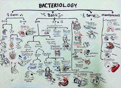 "Na'guará Bacteriology pic.twitter.com/TjHOdYx14F"""