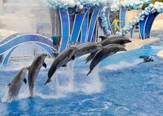Parques do SeaWorld!  - SeaWorld Orlando - Discovery Cove Orlando - Busch Gardens Tampa - Aquatica Orlando