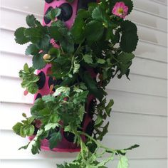 Strawberry and tomato planter made from IKEA bag dispenser thinger majigger #upcycling