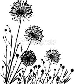 print photo of dandelions on canvas