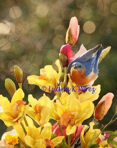 Bluebird Dancing in Orchids by EyesOfLuana on Etsy