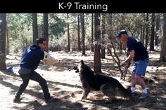 Are you looking for affordable and great behavioral classes for your dogs in Yucaipa, CA city? so Inland Empire Dog Training School is one of the best dog training center in Yucaipa, CA, you get many methods and easy techniques to handle your dogs. Dog Training School, Best Dog Training, Dog Psychology, Dog Search, Aggressive Dog, Big Bear, Training Center, Dog Park, Humane Society