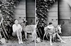Audrey Hepburn and a tiny horse.