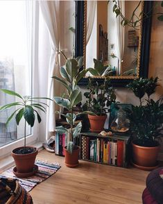 "2,812 Likes, 12 Comments - Urban Jungle Bloggers™ (@urbanjungleblog) on Instagram: ""Plants make every home a cozier and better place to live. You can grow your own houseplants too…"""