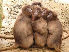 Una vez, un mico hambriento estaba buscando comida entre las ramas de los árboles. De repente, divisó unos cocos en el suelo, así que bajó del árbol para ver si los podía comer. Inmediatamente se dio cuenta de que uno de los cocos tenía dos pequeños agujeros y estaba lleno de maní. El mico metió …