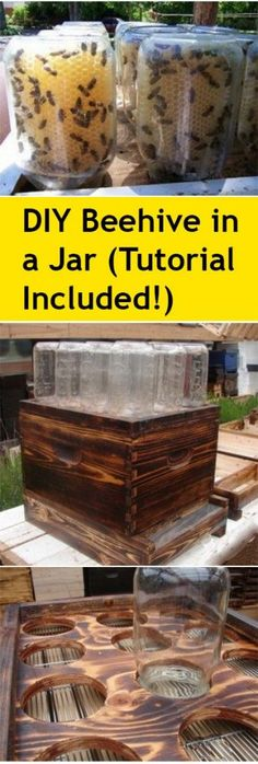 Gardening Ideas, Popular Gardening Tips, Create Your Own Beehive, Beehives, DIY Beehive, Beehive in a Jar, Save the Bees