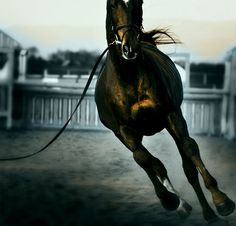 Lunge! Naughty Horsey. www.naughtyhorsey.com