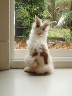 Cece the Lionhead Rabbit wants out