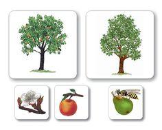 ovocné stromy - Hľadať Googlom