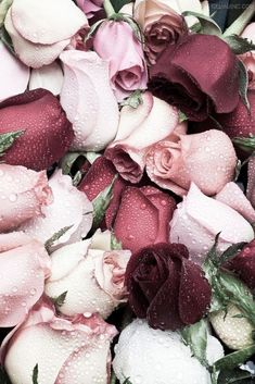 18 Ideas For Flowers Fondos Rosas Hipster Vintage, Style Hipster, My Flower, Beautiful Flowers, Dandelion Flower, Flower Diy, Beautiful Life, Flower Wallpaper, Red Wallpaper