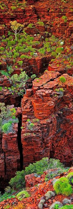 With sensational wet season rains this year the gorges of Karijini National Park this year looked amazing. With fresh green growth against the red earth of the Australia outback, the gorges at Karijini where at their peak.
