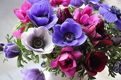 Anémonas. Abiertas, cerradas, blancas, roras, violetas... ellas siempre bonitas