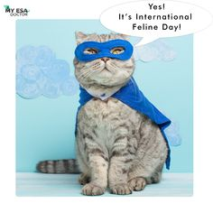 Is it or not? Do you know? #cateyes #happycats #cats_of_day #cat_imatges #myesadoctor #esa #cats_of_ig #kitties #pleasantcats #catlovers #catsofgram #meowsandwoofs #funpetloveclub #ig_catclub #catstocker #bestphotogram_dogs #pawproject #my_loving_pet #magnificent_meowdels #ic_animals #a_world_of_cats #elegant_cats #balousfriends #catworldwide #igclubcats #catsygram #best_cats #cutest_meow #wildlife_seekers #furrendsupclose Puzzles, Owl, Bird, Animals, Fictional Characters, Animales, Puzzle, Animaux, Riddles
