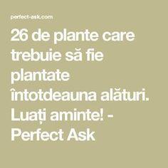 26 de plante care trebuie să fie plantate întotdeauna alături. Luați aminte! - Perfect Ask