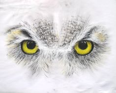 snowowl, chalk