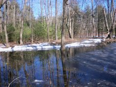 Vernal Pool or Puddle? Compare and contrast text to assign to student iPads via Frolyc.