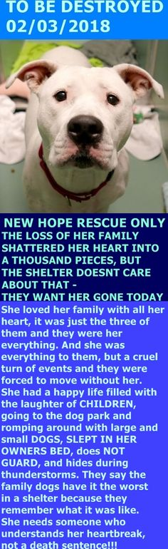 SAFE 2-3-2018 by Amsterdog Animal Rescue --- Hello, my name is Nova. My animal id is #19537. I am a female white dog at the Brooklyn Center. The shelter thinks I am about 2 years 6 months old. I came into the shelter as a owner surrender on 30-Jan-2018, with the surrender reason stated as person circumstance- moving – no pets allowed. http://nycdogs.urgentpodr.org/nova-19537/
