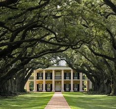 Louisiana: Great River Road and Cajun Country--- Oak Alley