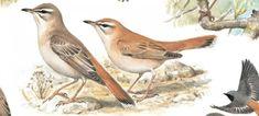 Welcher Vogel ist das? Vogelstimmen erkennen!   Duda.news Bird, Star, Animals, House Martin, Chaffinch, Kinds Of Birds, Cats, Animales, Animaux
