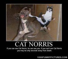 Cat Norris – Demotivational Posters
