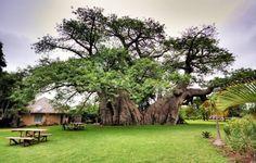 bar cadre spectaculaire afrique du sud