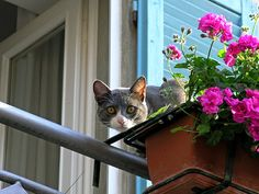 Cat flowers and balcony (2)