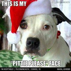 pittie please face