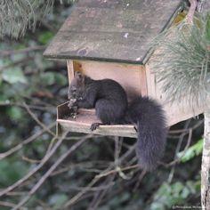 © Photoglobus, Michael Feigl, a squirrel in the birdhouse