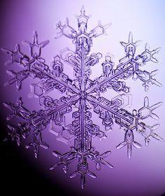 Purple Passion - Snowflake