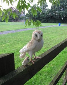 Mama owl with owlet