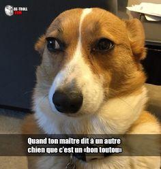 Quand ton maître dit à un autre chien... - Be-troll - vidéos humour, actualité insolite
