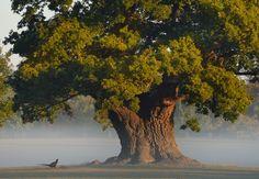 "english-idylls: "" Blenheim Palace, Oxfordshire. """