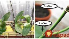 Keď si na nej všimnete toto, hneď začať prebúdzať: Najlepšia rada, prinúťiť kvitnúť aj staršiu orchideu! Home And Garden, House Plants, Flora, Flower Pots, Plants, Garden, Orchids, Flowers, Indoor Plants