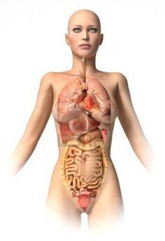 Interactieve plaat: De organen van een mens by Corien